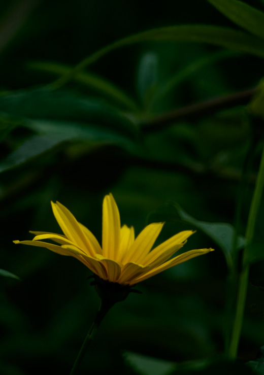 Blumenfoto mit Polarisationsfilter